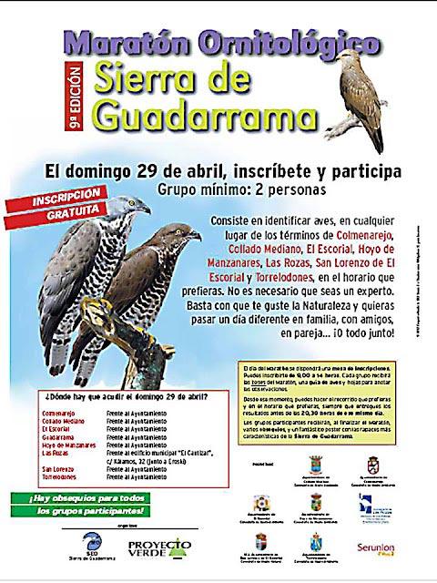 Maratón Ornitólogico de la Sierra de Guadarrama 2012