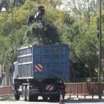 Camión cargando pinos talados en la Avda. de Torrelodones, frente a Las Marías, llegando a Torreforum
