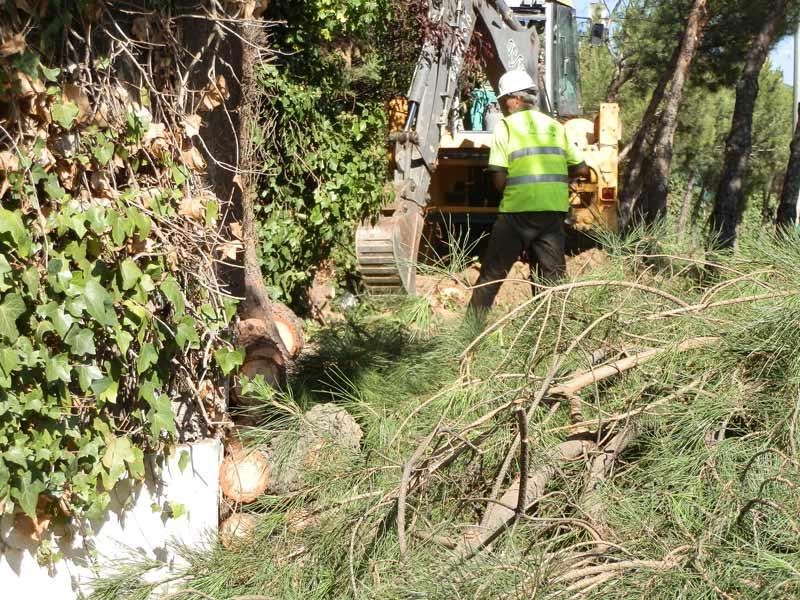 Tala de pinos en la Avda. de Torrelodones, frente a Las Marías, llegando a Torreforum