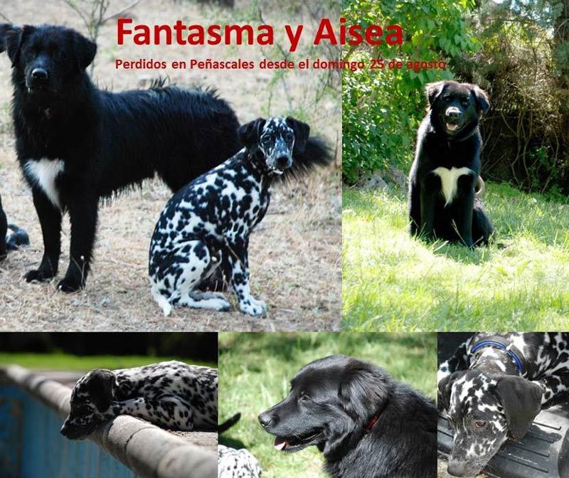 Buscan a estos dos perros perdidos en Torrelodones