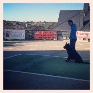Exhibición de perros policía en el CC Espacio Torrelodones