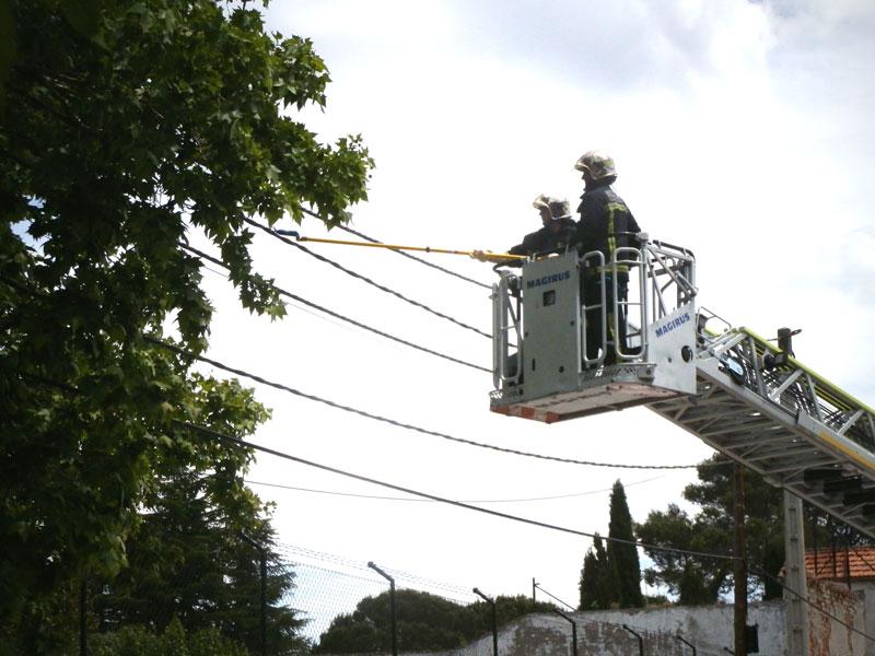 El peligro de los cables el ctricos a reos y los rboles - Trabajo en torrelodones ...