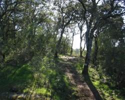 Senda de los árboles
