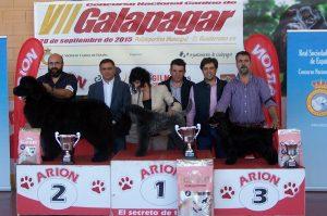 concurso-canino-galapagar-2015