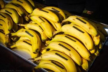 Diese wilden Bananen mussten alle von der Fondo-Crew gefangen, eingeritten und dann mit Brandzeichen versehen werden.