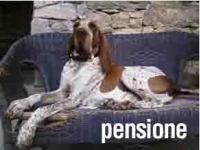 Casa Vaikuntha. Pensione e riabilitazione del cane.