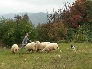 Lo sheep dog di Casa Vaikuntha