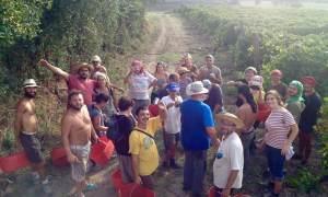 Sabato pomeriggio a Costa Vescovato saranno rappresentati oltre un milione di contadini italiani