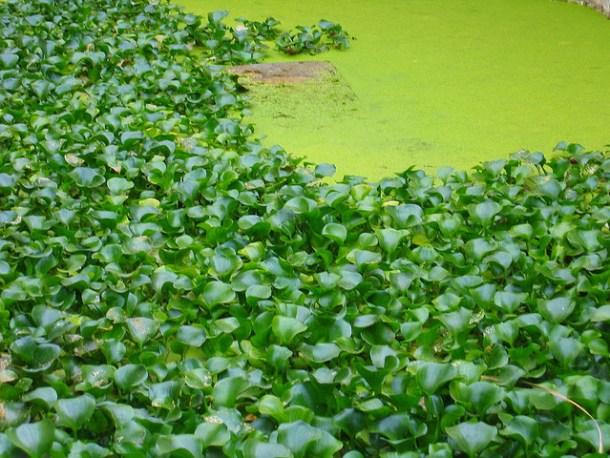 Alimentación de las tortugas de agua