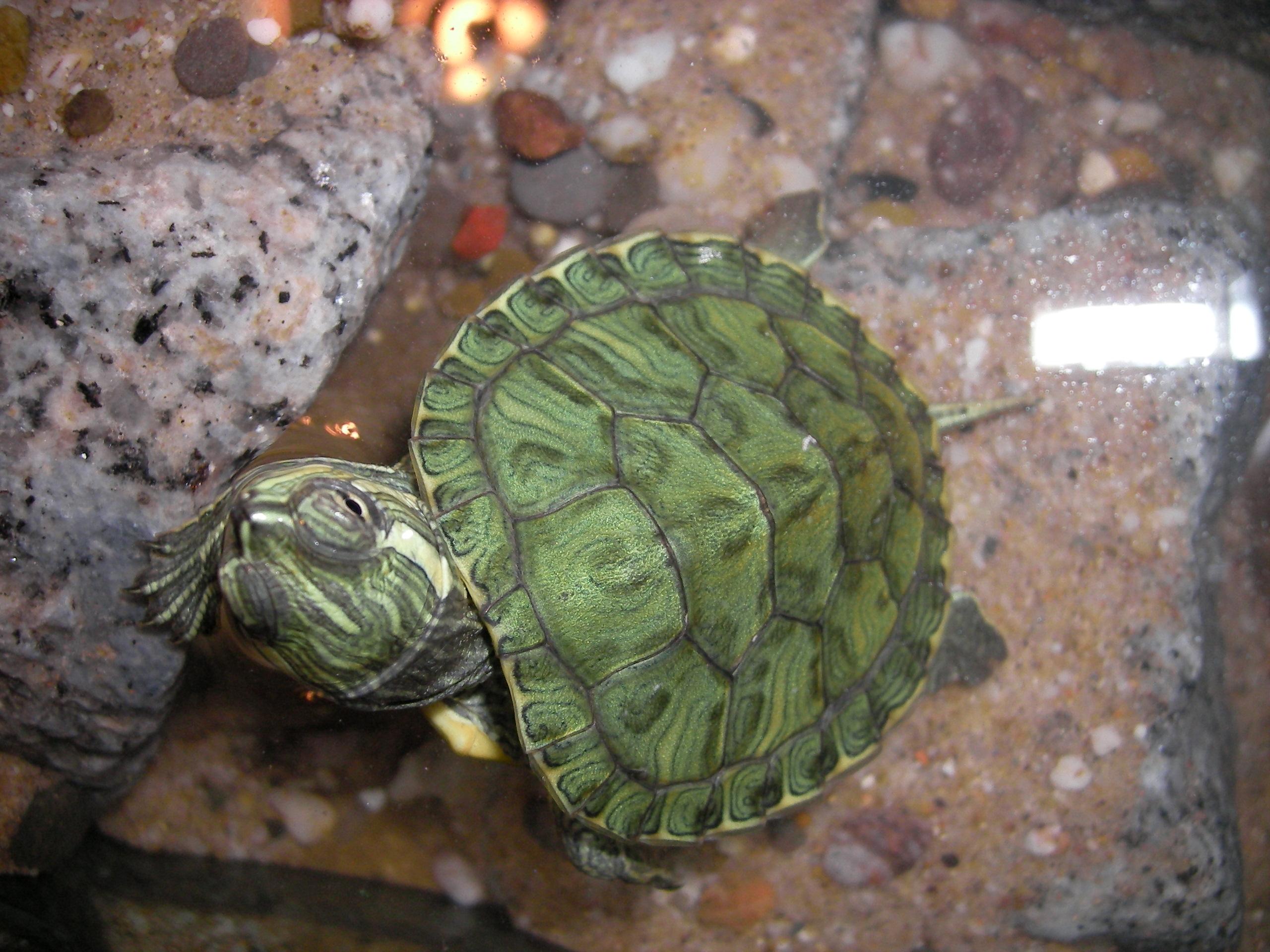 Hibernaci n de las tortugas for Filtro para estanque de tortugas
