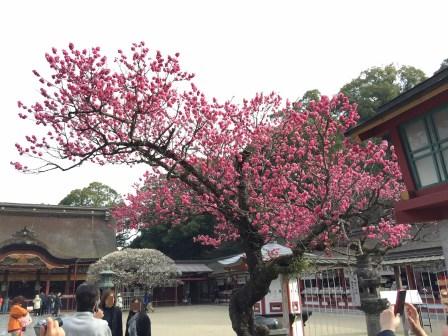 ★梅の花 赤