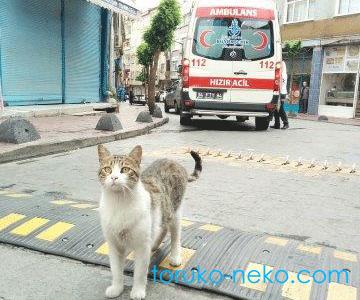 トルコの街中で、救急車と猫が路上にいる写真。 トルコ イスタンブール 猫歩き 画像