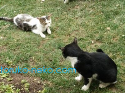 cat-(5)