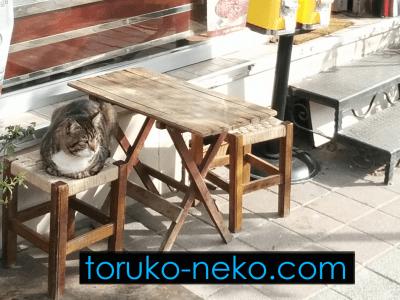cat-priority-seat cat トルコ イスタンブール 猫歩き ネコの優先座席に座る猫の写真 画像
