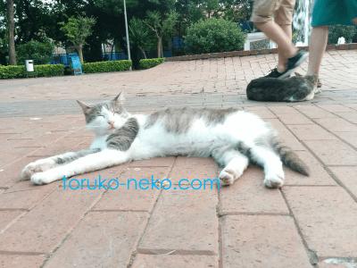 cat トルコ イスタンブール 猫歩き 往来の激しい場所で寝てるネコの写真 画像