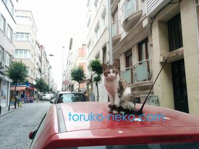 トルコ 猫歩き 自爆テロ 銃撃戦 速報 治安が悪化