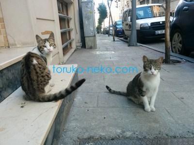 トルコ イスタンブールで二匹の猫が じゃれあった後、こちらを向いている写真 画像