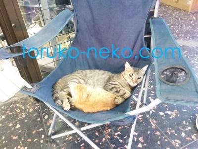 トルコイスタンブールでこげ茶色の猫が クリーム色の子猫をお腹に抱いて、寝ながらこちらを向いている画像