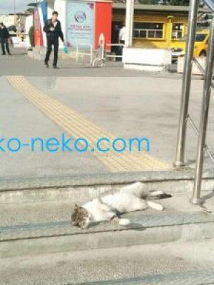 人通りの多い階段の所で寝る、トルコ イスタンブールの一匹の猫ちゃん