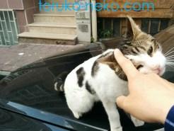 一匹の可愛い子猫がこちらに気を許してなでてもらいたいモードに入った時の画像 写真