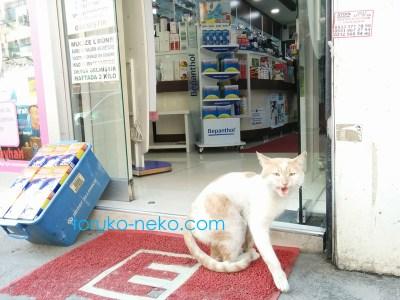 トルコ猫歩き トルコ イスタンブールの薬局 eczaneの手前で一匹の猫がこちらを向いて吠えている画像 写真