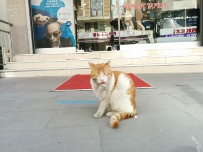 トルコ イスタンブールの薬局の前で猫が手をなめなめしている写真 画像