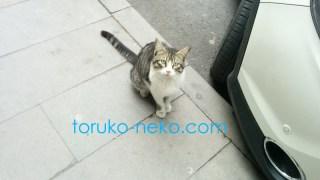 一匹の猫を高い目線から写真におさめた画像 写真トルコ猫歩き