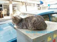 トルコ イスタンブールで青い車の上に寝そべっているグレイ グレー ねずみ色の一匹の猫の写真 画像