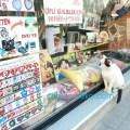 トルコ イスタンブールで 結婚式のカップルの幸せそうな写真に見入る白黒ネコの写真 画像。