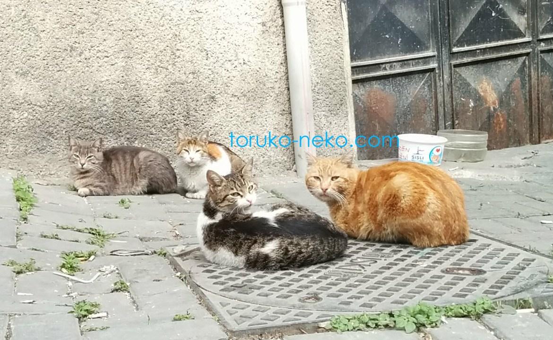 トルコ猫歩き イスタンブールで4匹の猫が井戸端会議中で こちらを向いている写真 画像