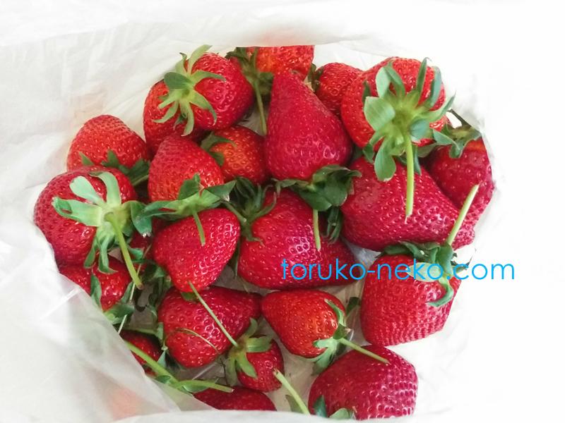 トルコ イスタンブールで 真っ赤な美味しそうなイチゴがたくさんある画像 写真 strawberry strawberries