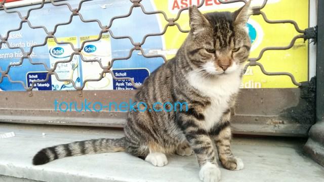 イスタンブールの猫が一匹こちらを向いている写真 画像 トラ猫 猫の可愛がり方
