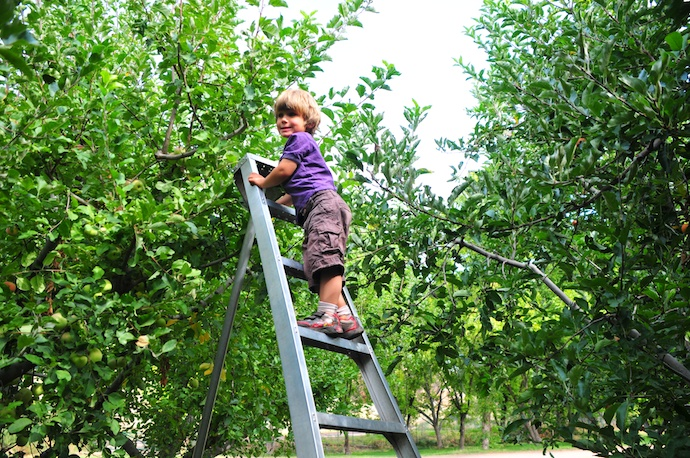 Climbs the Ladder