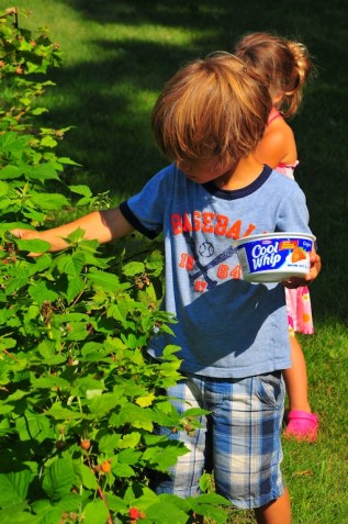 Picking Grandma's raspberries.