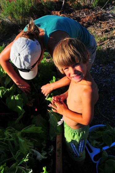 Digging for beets