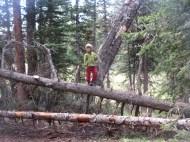 Tory the lumberjack.