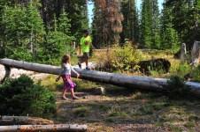 Logs to walk on