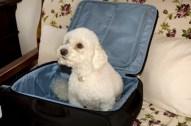 Poppie ready for the trip to Positano.
