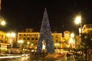 Tree in main piazza in Sorrento