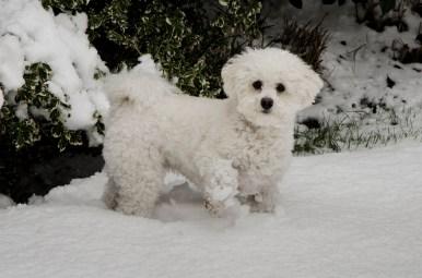 Poppie still in the snow