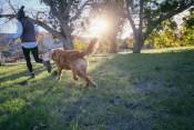犬と散歩を楽しむ