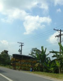tropics5