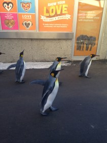 Penguins - 1 (1)
