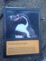 Penguins - 3