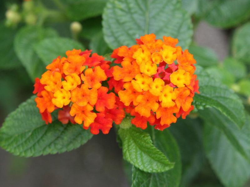 Garden Plants That Are Poisonous Pdf