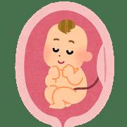 胎児・胎盤のイラスト
