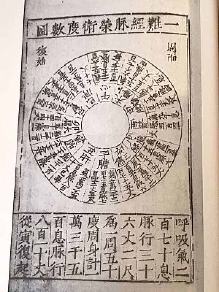 東洋医学のバイオリズムと経絡の図