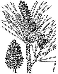 TOTAL-PLANT: NATIVE PLANTS OF CALIFORNIA Search Form