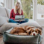 Studium mit Hund