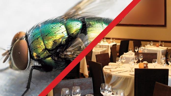 pests flies restaurant